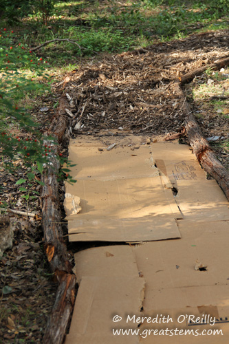 Cardboard layer for mulched pathway