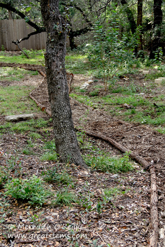 Mulched woodland pathway