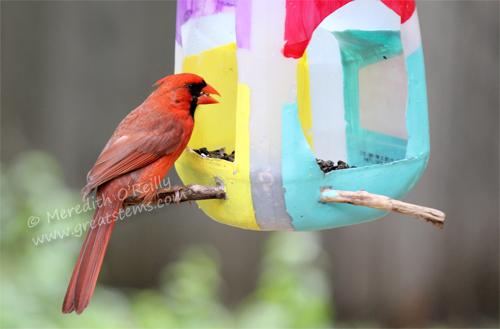 Wildlife Projects For Kids Milk Jug Bird Feeders Great Stems
