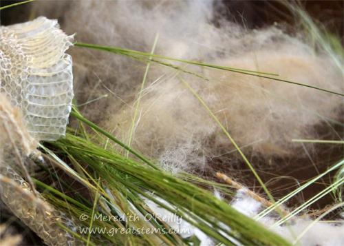 nestingmaterialsD05-06-13