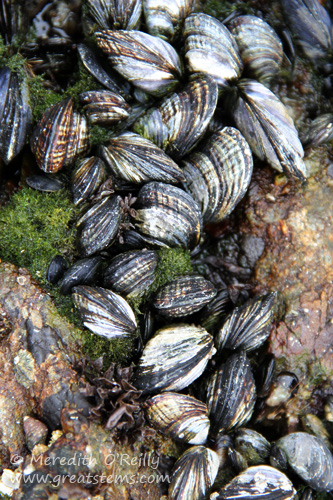 mussels07-13-13
