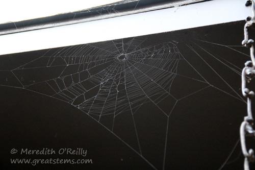 spiderweb10-1-13