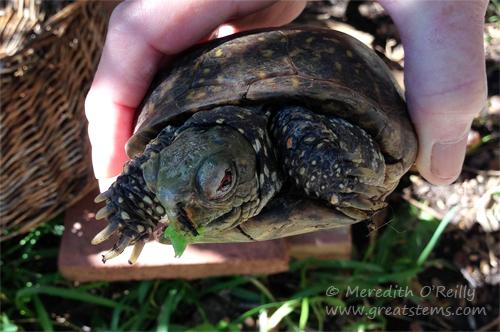 turtles11-04-13