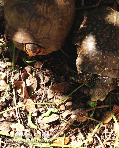 turtlesb11-04-13