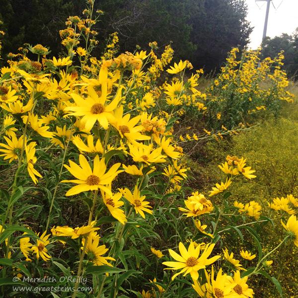 maxsunflowerfall10-19-14