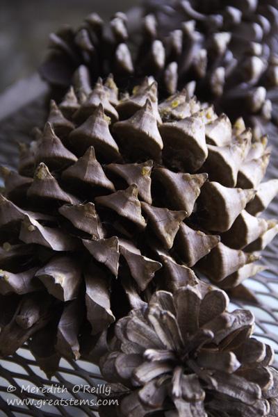 pinecones02-15-15