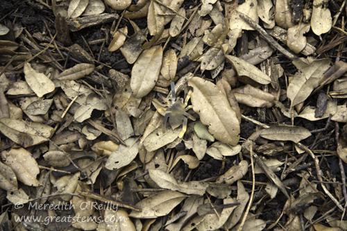 camouflageactivity20150523