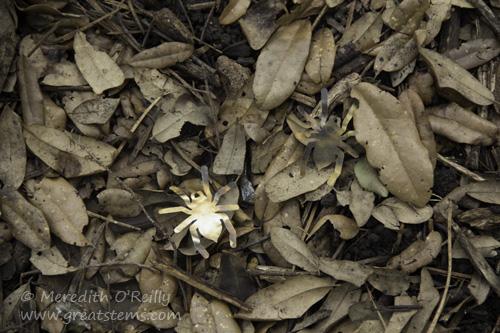 camouflageactivityD20150523