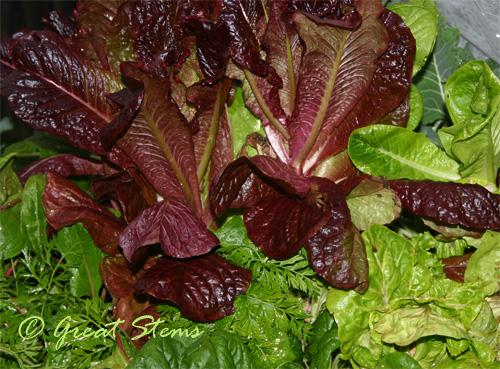 harvestb01-07-10.jpg