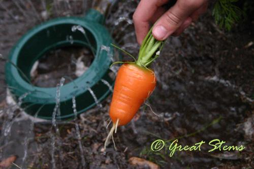 harvestd01-07-10.jpg