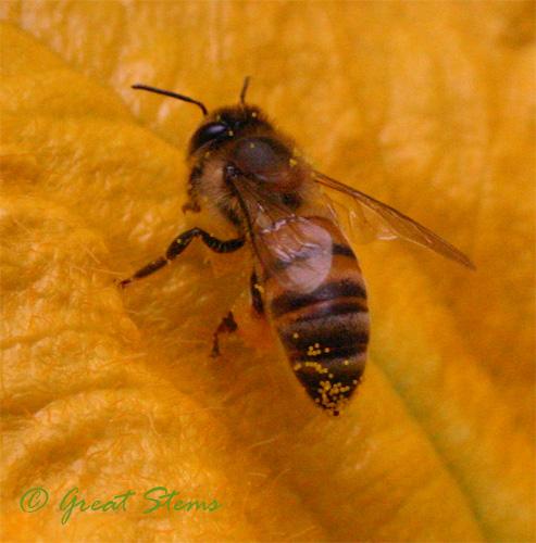 honeybeea09-25-09.jpg