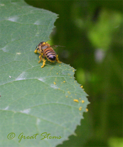 honeybeeb09-25-09.jpg