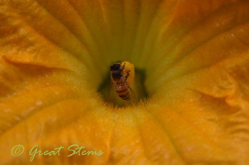 honeybeec09-25-09.jpg