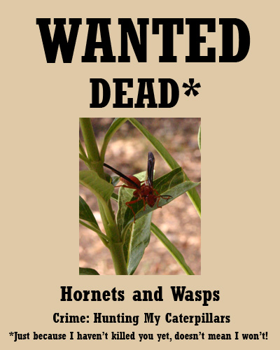 hornets07-29-09.jpg