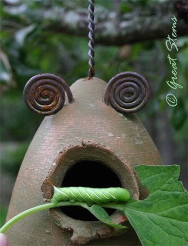 hornwormf05-22-10.jpg