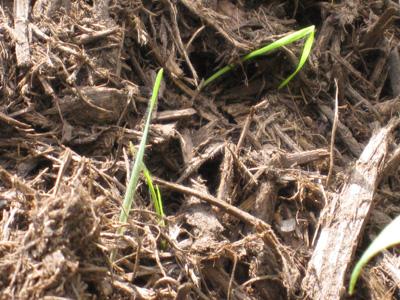Grass 10-22-08.jpg