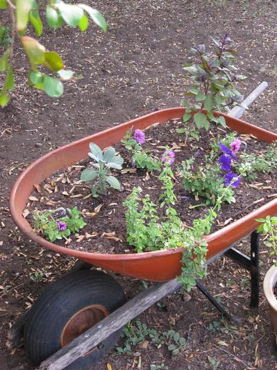Wheelbarrow of herbs and flowers