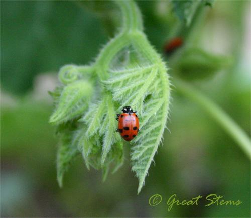 ladybuga08-31-09.jpg
