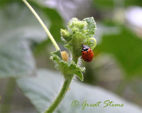 ladybuge08-31-09.jpg