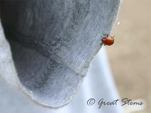 ladybugg08-31-09.jpg