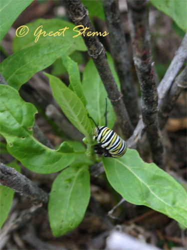 monarch05-15-10.jpg