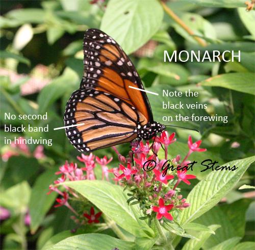 monarchc10-30-09.jpg