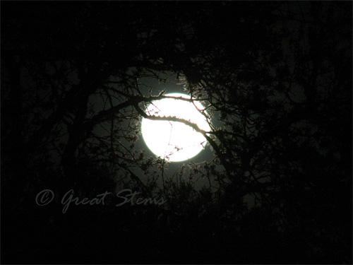 moonb03-29-10.jpg