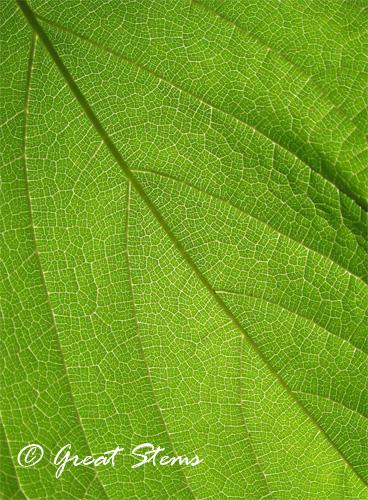 mulberryd05-06-10.jpg