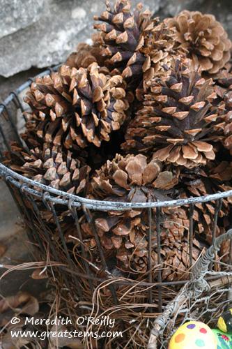 pineconesb01-12-12.jpg