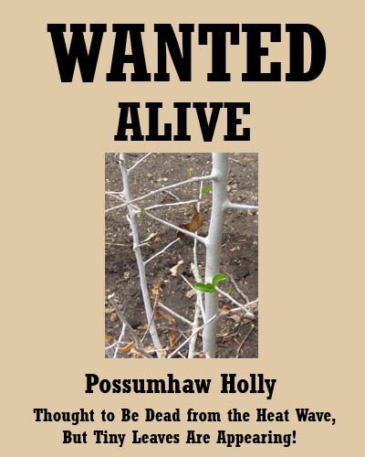 possumhaw07-29-09.jpg