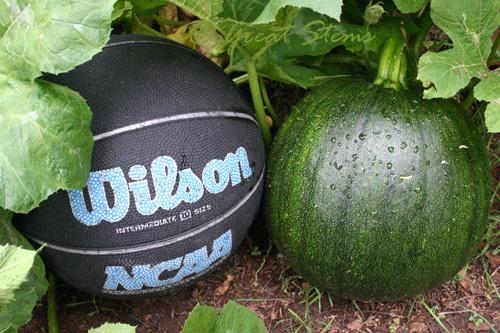 pumpkinball09-29-09.jpg