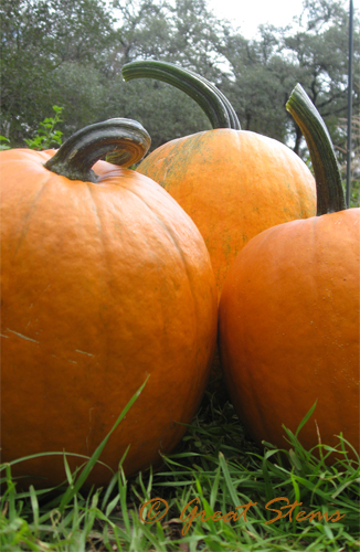 pumpkins10-26-09.jpg