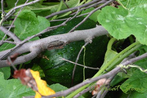 pumpkintreea09-29-09.jpg