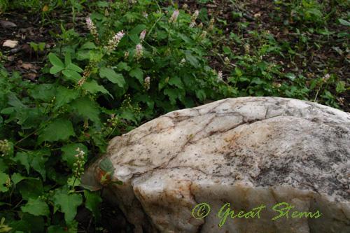 quartz10-05-09.jpg