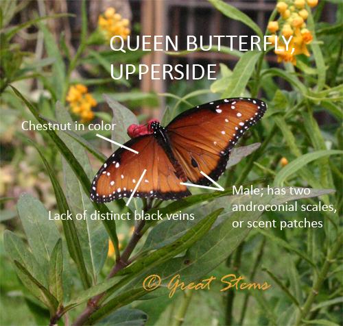 queenmalea10-30-09.jpg