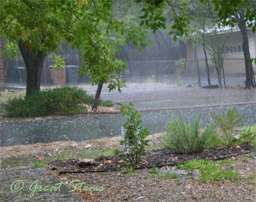 rain07-30-09.jpg