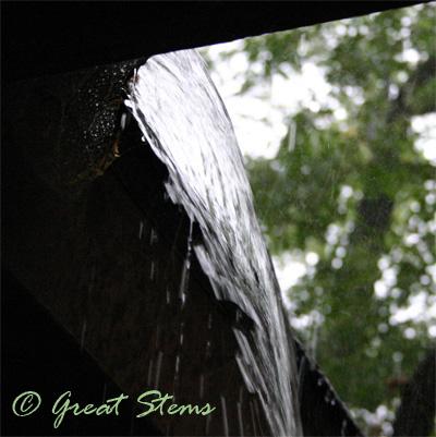 rainb07-31-09.jpg