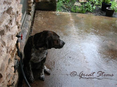 rainc06-09-10.jpg