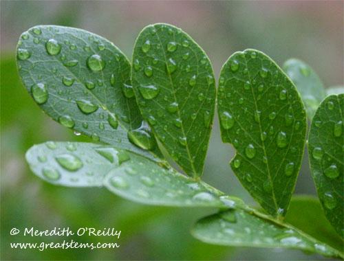 rainonlaurel11-08-11.jpg