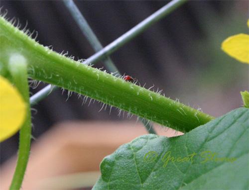 redbug08-12-09.jpg