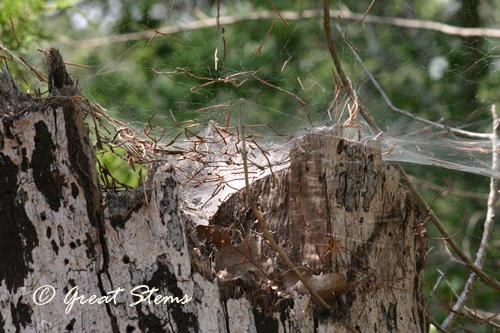 roughsm09-05-10.jpg