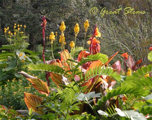 sabgplantl11-7-09.jpg