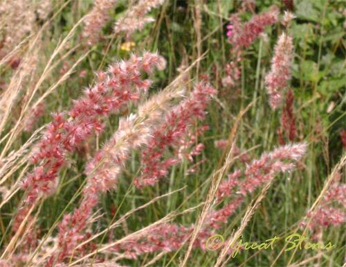 sabgplantn11-7-09.jpg