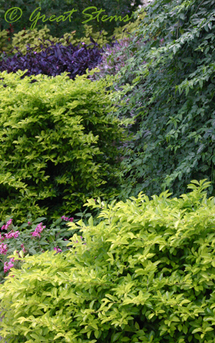 sabgplantt11-7-09.jpg