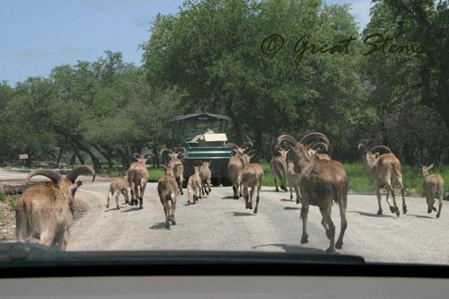 safarih05-15-10.jpg