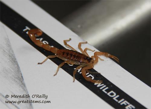 scorpionb02-04-12.jpg
