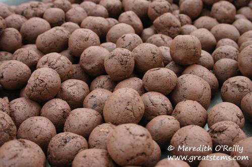 seedballsaa10-22-11.jpg