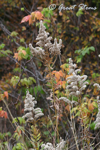 seedheadsb11-14-10.jpg