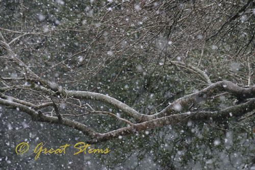 snow02-23-10.jpg