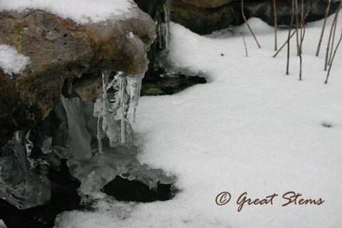 snowe02-04-11.jpg